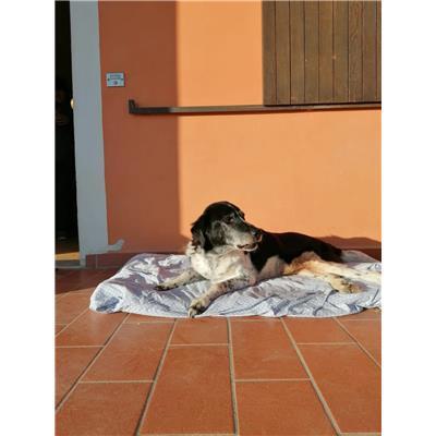 Comune Buggiano - 982009105513432